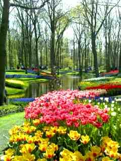 世界一の花園は遠し…